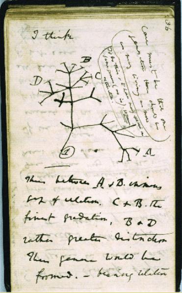 darwin's tree of life evolution