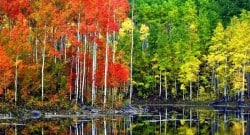 Pando colony Fishlake National Forest US Forest Service