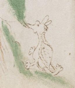 Voynich Manuscript dragon illustration - Beinecke Library, Yale University