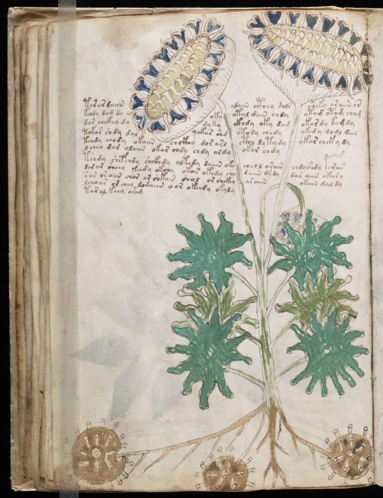 Voynich Manuscript Illustrations showing plant composites - Beinecke Library, Yale University