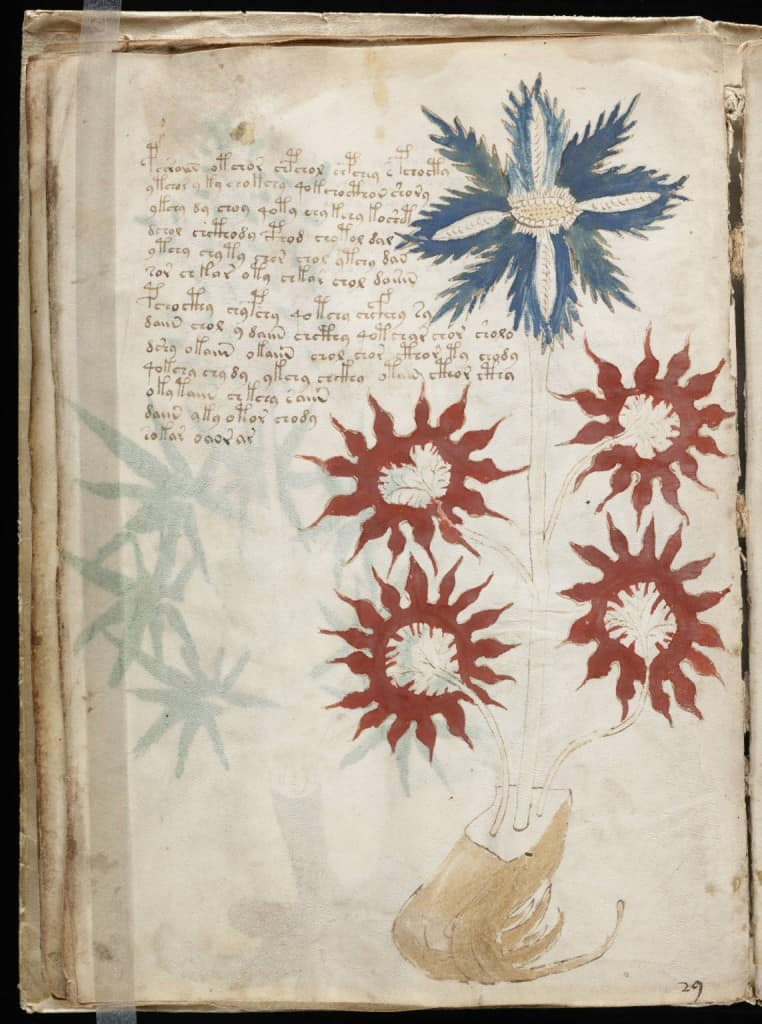 Voynich Manuscript from Beinecke Rare Book & Manuscript Library, Yale University