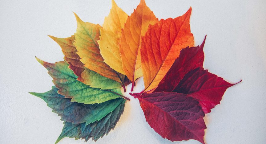 leaves depicting seasons by showing colours from green to maroon