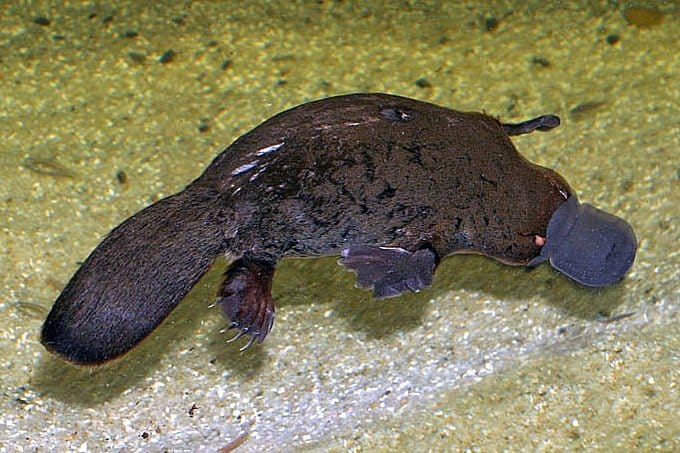 Stefan Kraft - Sydney Aquarium